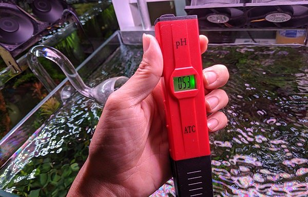 Sử dụng bút đo pH để kiểm tra độ pH bể cá rồng