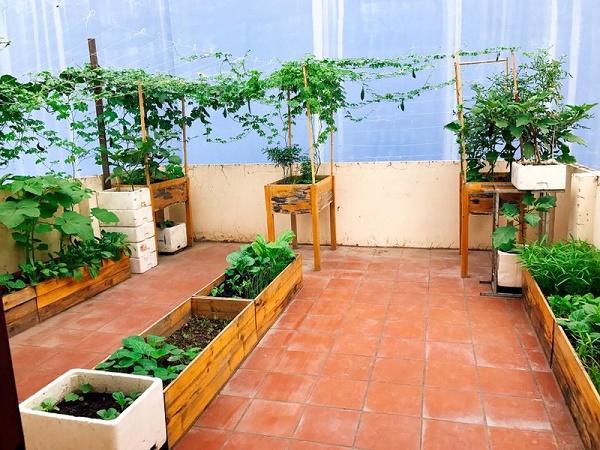 Các loại hộp gỗ trồng trên trên sân thượng