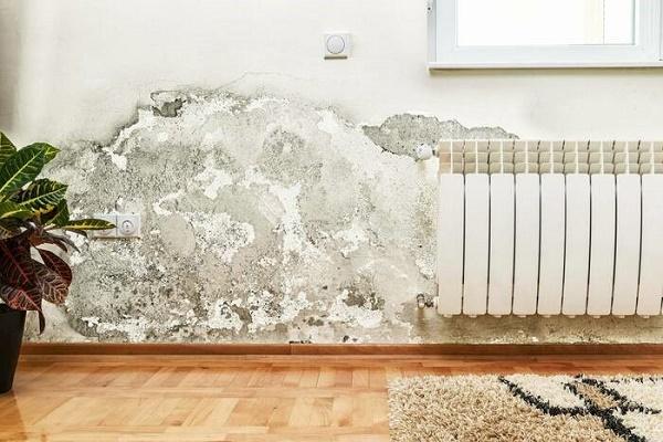 Tường bị ẩm mốc mang đến gây hại cho ngôi nhà