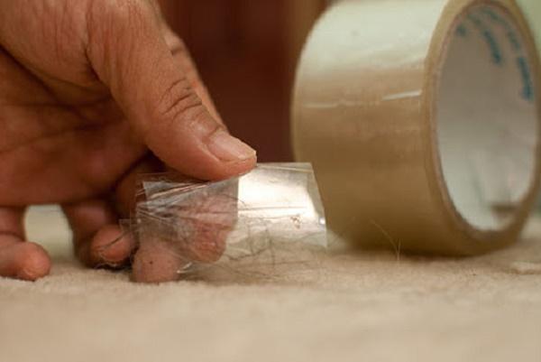 Làm sạch lông mèo bằng băng dính đơn giản