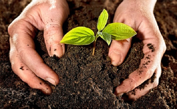 Đất trồng cần đản bảo có đầy đủ dinh dưỡng