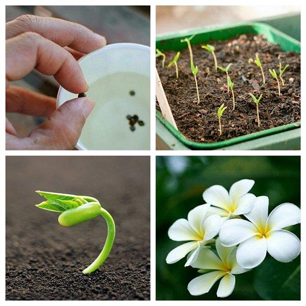 Các bước gieo hạt giống phổ biến nhất