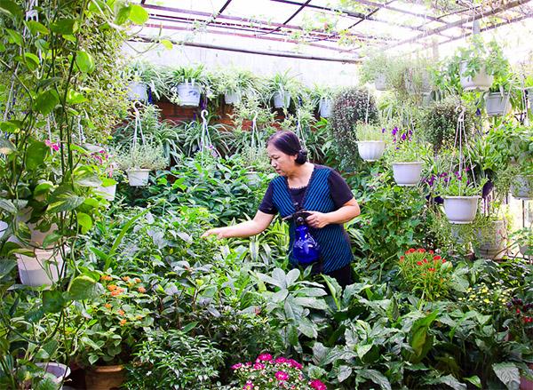 Chú ý luôn chăm sóc vườn rau, không nên bỏ bê
