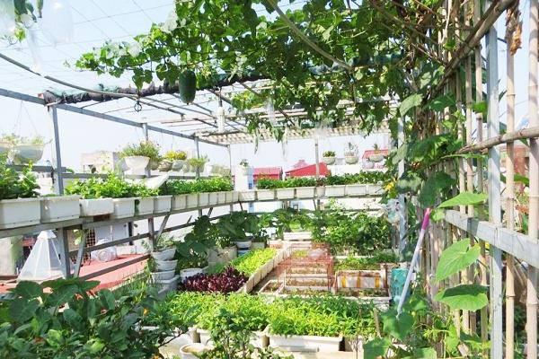 Vườn rau cần được đón nhiều ánh nắng
