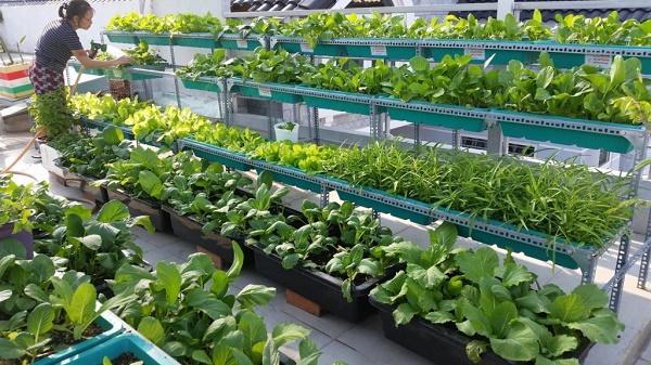 Chọn các loại chậu trồng rau phù hợp