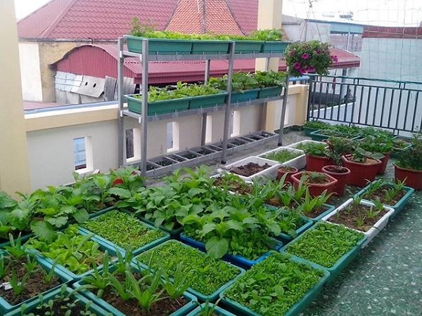 Vườn rau trên sân thượng cung cấp nguồn thực phẩm dồi dào