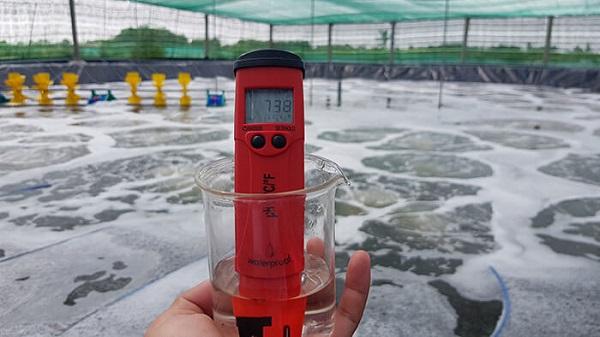 Cách sử dụng bút đo pH