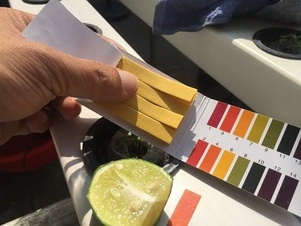 Đo độ pH bằng giấy quỳ