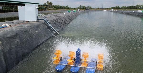 Sử dụng quạt gió để cung cấp oxy cho nước