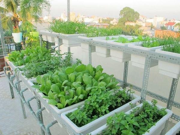 Chọn chậu phù hợp cho sự phát triển của từng loại rau