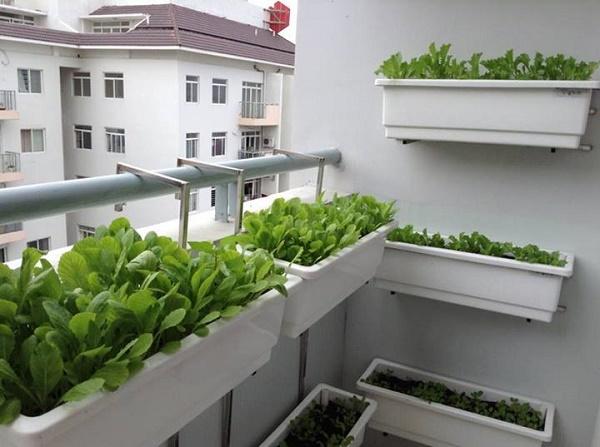 Chậu nhựa trồng cây được sử dụng phổ biến nhất