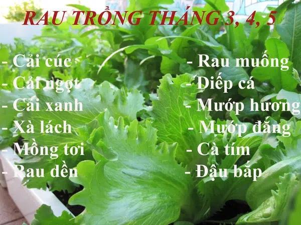 Các loại rau thích hợp trồng vào tháng 3