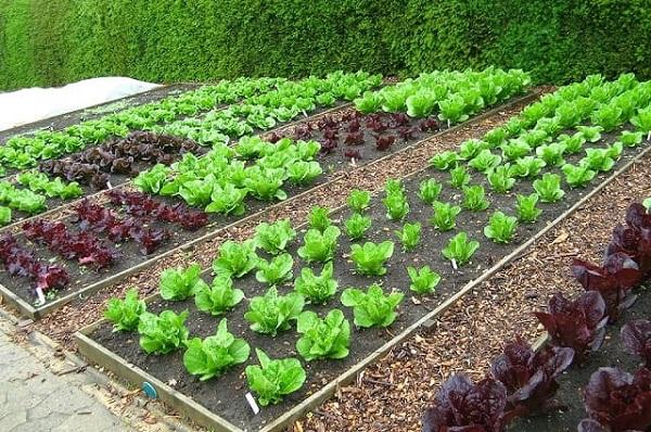 Khí hậu tháng 3 thích hợp trồng nhiều loại rau mùa hè