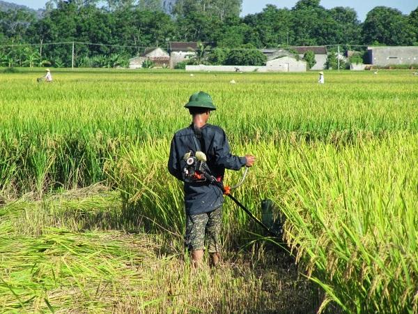 Chế máy cắt cỏ thành máy cắt lúa