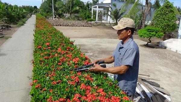 Hàng rào hoa bông trang