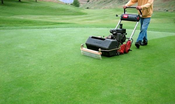 Máy cắt cỏ sân golf