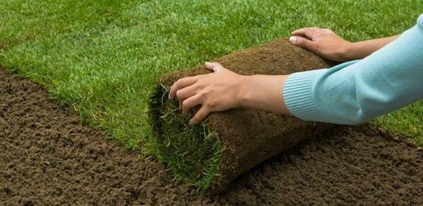Cách trồng cỏ sân golf