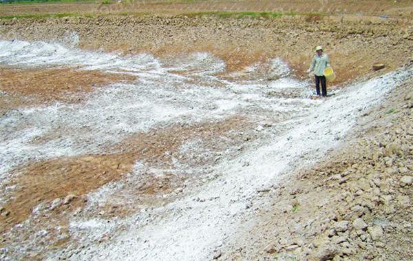 Biện pháp cải tạo đất mặn