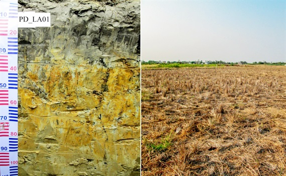 Đất nhiễm phèn là gì?