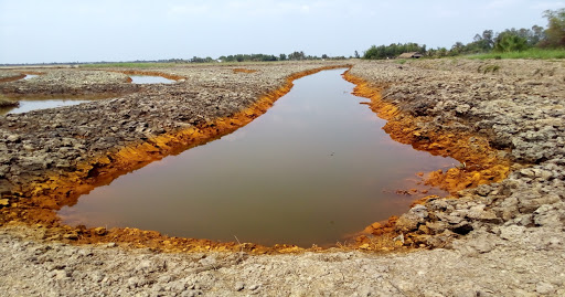 Đất mặn thích hợp trồng cây gì để có năng suất tốt?