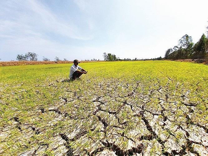 Nguyên nhân nào khiến đất bị nhiễm mặn?