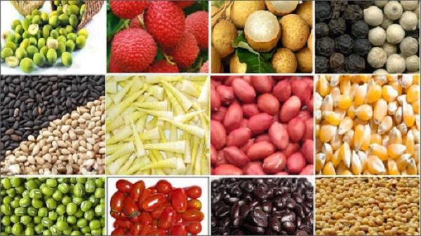Cân điện tử cân các loại hàng hóa nông sản