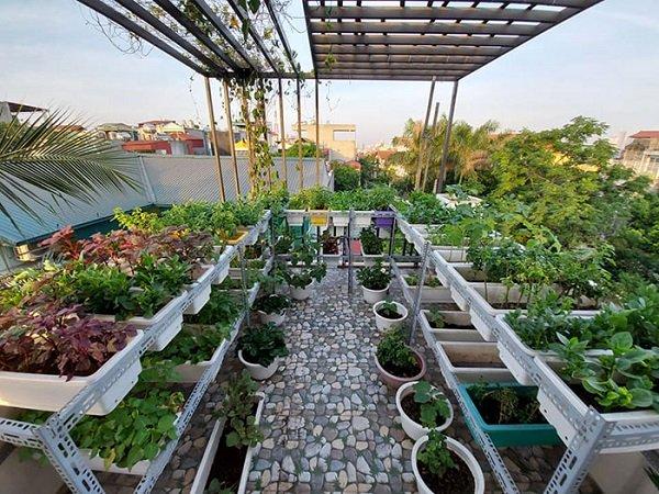 Cách làm giàn trồng cây trên sân thượng