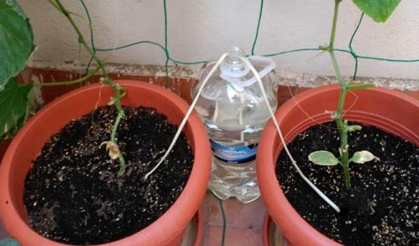 Chế tạo hệ thống tưới nước nhỏ giọt bằng chai nhựa bỏ đi