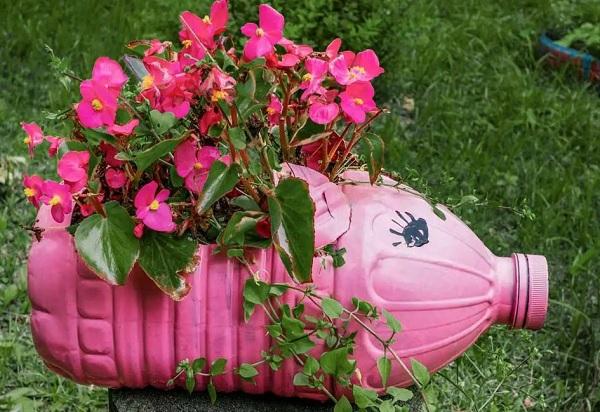 Tận dụng chai nhựa trồng rau sạch quanh nhà