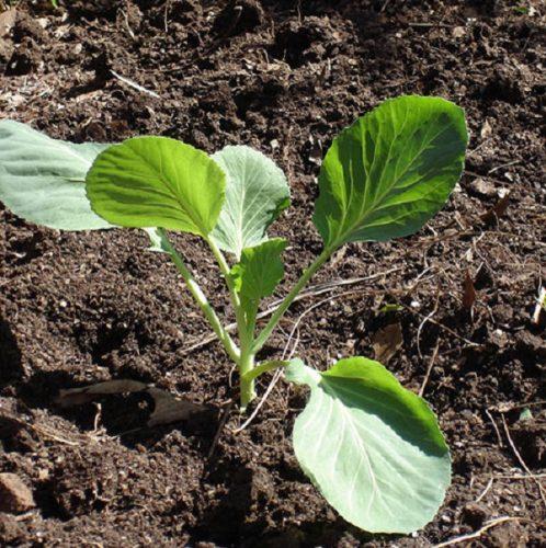 Chăm sóc cây bằng tưới nước và phân bón